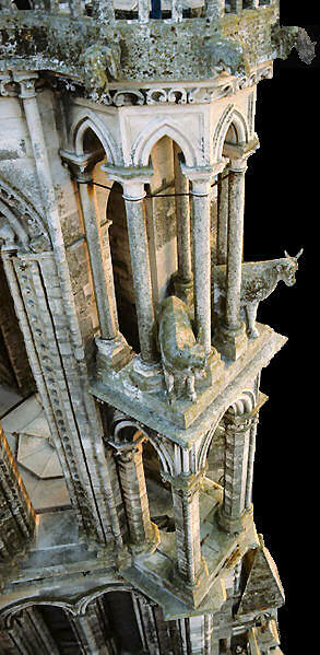 Oxen on Laon cathedral