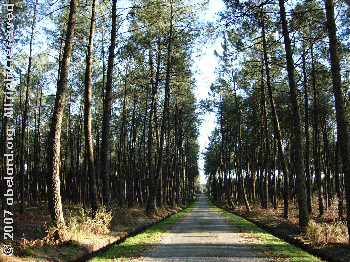 A forest access road in Les Landes, 2007