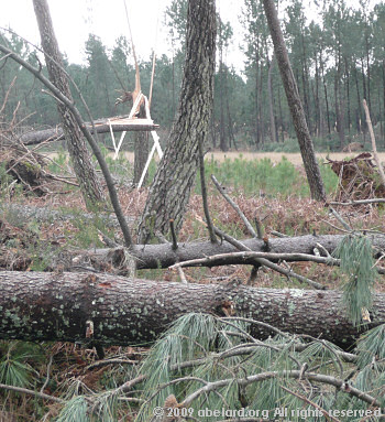 Ravaged forest, felled pines in Les Landes