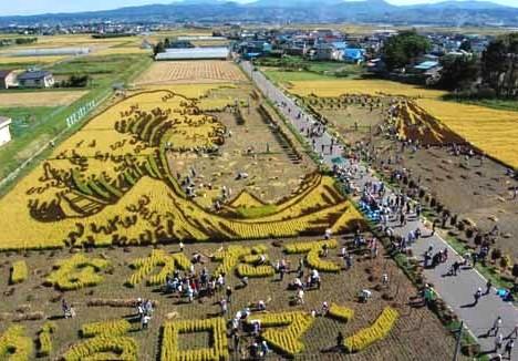 Hokusai's wave and Mount Fuji being harvested. Image: inakadate.aomori.jp