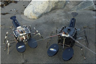 Robot mechnical lobsters. Image credit: US Navy