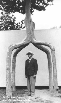 Axel Erlandson (1884-1964) standing beneath one of his trained trees. Image credit: Wilma Erlandson, Cabinet Magazine
