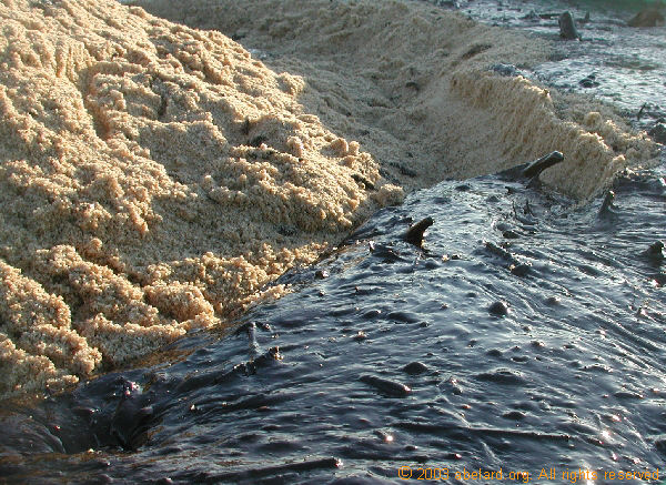 Heavy crude oil washed up on a French beach
