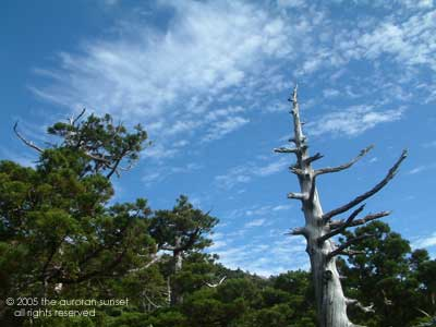 Forest clearing on Yakushima Island. Image credit: the auroran sunset.