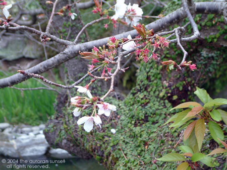 An arrangement of pretty plants at Senganen (Iso Gardens). Image credit: the auroran sunset