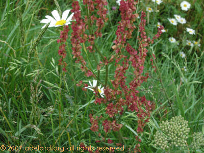 A rich profusion of small red flowers.