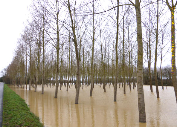 The local Uccello forest, under water