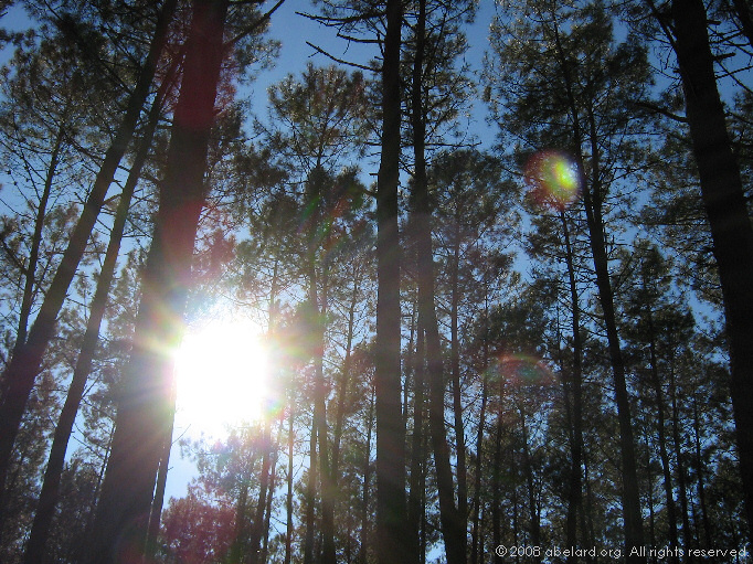 Early spring sunshine in Landais pines