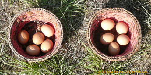Image result for eggs in two baskets